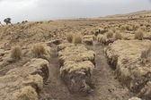 Soil erosion in the Simien Mountains National Park, Ethiopia. — Fotografia Stock