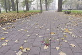 Autumn leaves in a city park in Ivano-Frankivsk, Ukraine. — Stock Photo