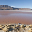 Laguna Colorado at The Eduardo Avaroa N. P., Bolivia. — Stock Photo