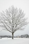 Frosted tree in winter time, Russia. — Stock Photo