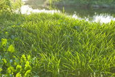 Morning sunlight on a grass. — Stock Photo
