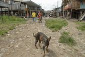 Stray dog on a dirty street in Belen, Iquitos, Peru. — Stock Photo