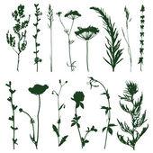 Meadow grass — Stock Vector