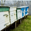 Apiary — Stock Photo