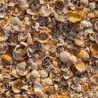 Stock Photo: Sun rises on pile of shells