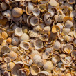 The sun rises on a pile of shells — Stock Photo