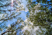 Spring landscape of trees against the sky — Стоковое фото