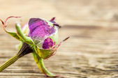 A dried rose on wooden background — Stock Photo