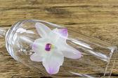 Ahşap zemin üzerinde orkide bakkaliye — Stok fotoğraf