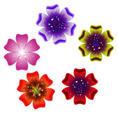 Set Brochure design, vector abstract background with beautiful colored flower pattern — ストックベクタ
