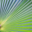 Banana leaf texture — Stock Photo
