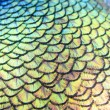 Beautiful peacock feathers — Stock Photo