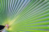 Banana leaf texture — Stock Photo