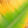 Stock Photo: Colorful fresh bananleaf texture