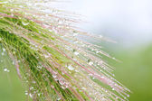 Grass with water droplets  — Stock Photo