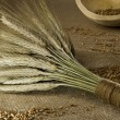 Stock Photo: Rustic setting with wheat sheaf and grains