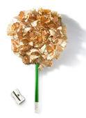 Albero a matita — Foto Stock