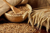 Grains and ears of wheat — Stock Photo