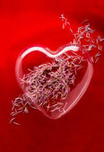 Flower petals in glass heart — Stock Photo