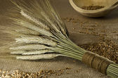 Rustic setting with wheat sheaf and grains — Stock Photo
