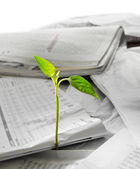 New life growing out from recycled papper — Stock Photo