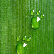 Stock Photo: Carbon footprints on leaf