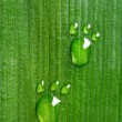 Carbon footprints on leaf — Stock Photo