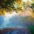 Beams of morning sun — Stock Photo