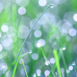 Grass blade with dewdrop — Stock Photo #28084887