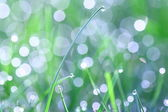 Grass blade with dewdrop — Stock Photo