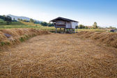 Hut in the terrace rice field — Stock Photo