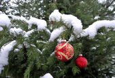 Christmas tree in the snow — Stock Photo