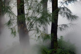 Forest Fog — Stock Photo