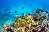 Underwater On Coral Reef — Stock Photo