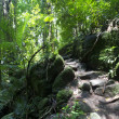Постер, плакат: Rainforest Mossman Gorge