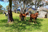 Horses In Meadow — Stock Photo