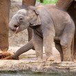 Baby Elephant — Stock Photo #34789927