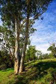 Australian Bush Landscape — Stock Photo