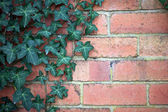 Bricks and Ivy — Stock Photo