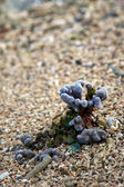 Coral On Beach Great Barrier Reef — Zdjęcie stockowe