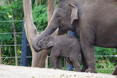 Elephant Feeding Time — Stockfoto