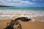 Apollo Bay Beach Victoria — Stock Photo