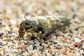 Hermit crab On Beach — Stock Photo