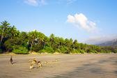 Australian Kangaroos On Beach — Stock Photo