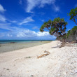 Tropical Coral Beach — Stock Photo