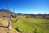 Country Landscape Australia — Stock Photo