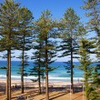 Manly Beach Australia — Stock Photo #38816689