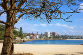 Manly Beach Sydney — Stock Photo