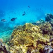 Great Barrier Reef Whitsundays — Stock Photo