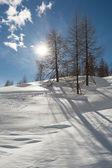 Sun shining through trees growing on a ridge — Stok fotoğraf